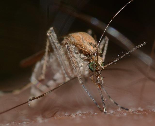 ドイツの蚊