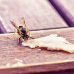 夏のドイツは蜂にご注意!