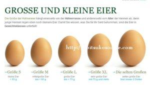 ヨーロッパの卵のサイズ規格