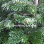 生木のクリスマスツリーの種類と扱い方