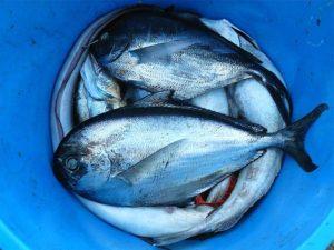 お魚を食べる習慣がないドイツ人