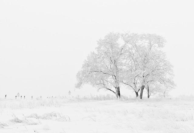 winter-schnee-feld